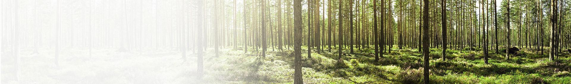 Banner drzewa w lesie
